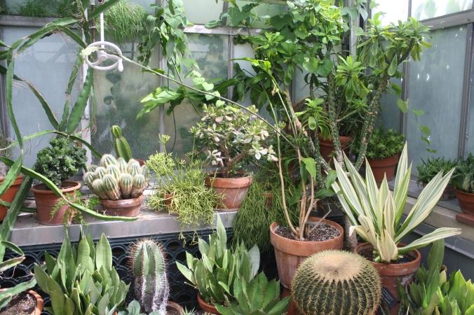 biltmoresucculents2