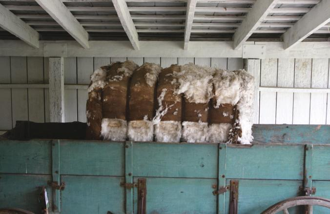 CottonBail
